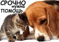 Бездомные животные ждут нашей помощи!