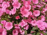 Наш цветущий детский сад